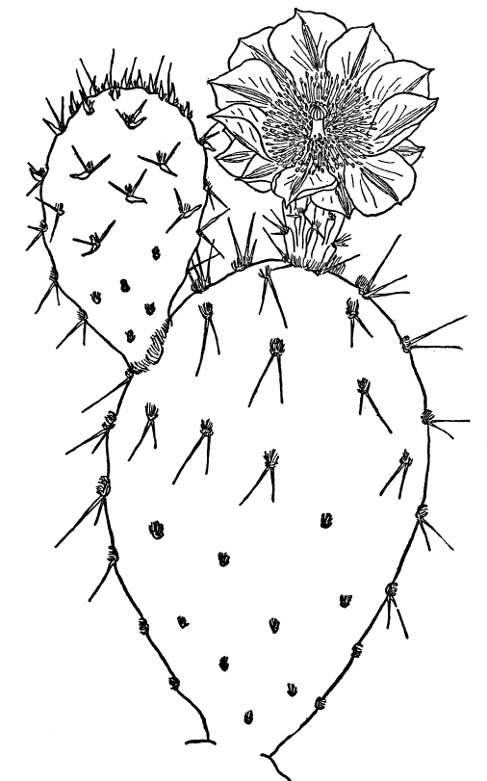 p102 1jpg - Prickly Pear Cactus Coloring Page